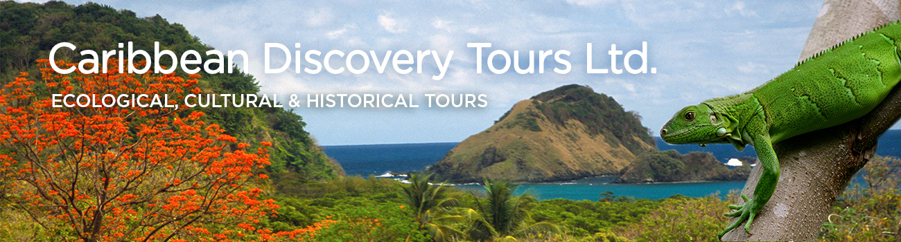Caribbean Discovery Tours ad